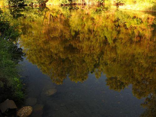 upė,pabrėžia,vanduo,medžiai