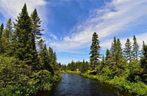 upė,vanduo,medžiai,gamta,mėlynas,dangus,krūmai,krūmai