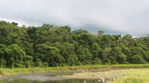 upė, džiunglės, chitwan, Nepalas, natūralus & nbsp, parkas, upės & nbsp, bankas, upės krantas Chitwan, Nepalas.