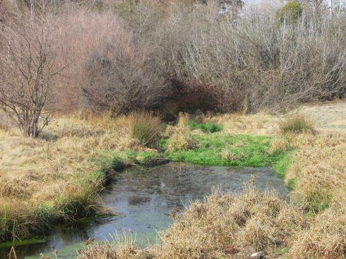 upė, gamta, sausra, vanduo, upė sausra 13