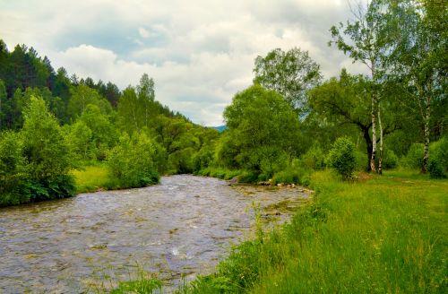 upė, medis, miškas, gamta, vasara, žalias, kraštovaizdis, upė miške