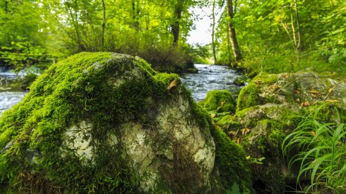 Upės Kraštovaizdis, Princas Parkas, Krauchenwies, Seefeld, Samanos Akmuo, Akmuo, Žalias, Jūros Dumbliai, Žalia Akmuo, Samanos, Miškas, Gamta, Rokas