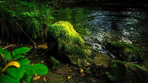 Upės Kraštovaizdis, Samanos, Krauchenwies, Seefeld, Samanos Akmuo, Akmuo, Žalias, Jūros Dumbliai, Žalia Akmuo, Miškas, Gamta, Rokas