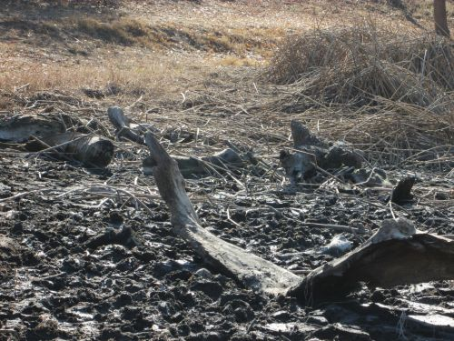 upės griovys, Kalifornija, gamta, sausra, upės vagystė sausra 3