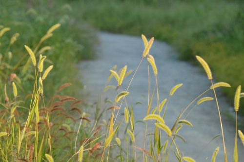 upės,gamta,foxtail,srautai,upelis,upelis,vanduo,kraštovaizdis,lauke,baseinas