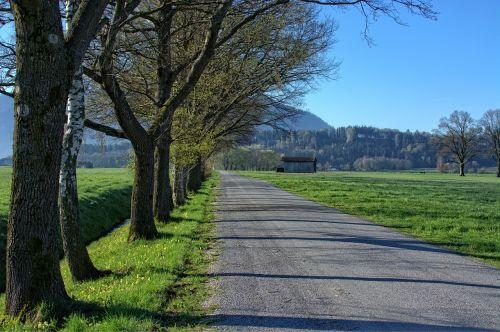 kelias,toli,medžiai,alėja,gamta,platus,toli,pavasaris,kraštovaizdis,bavarija,Chiemgau,šventė,atsigavimas,pieva,žalias,ganykla