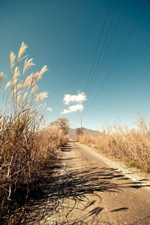 kelias,kelias,kelias,kaimas,aukšta žolė,dangus,mėlynas,kelionė,kryptis,kelias,aplinka,gamta,lauke,elektros laidai