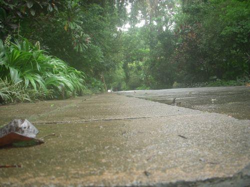 kelias,peradeniya sodas,iš apačios,ilgas atstumas,kandy,Šri Lanka,peradeniya,ceilonas