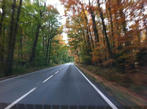 kelias,ruduo,greitis,kelio,vairuoti automobilį,vairuoti