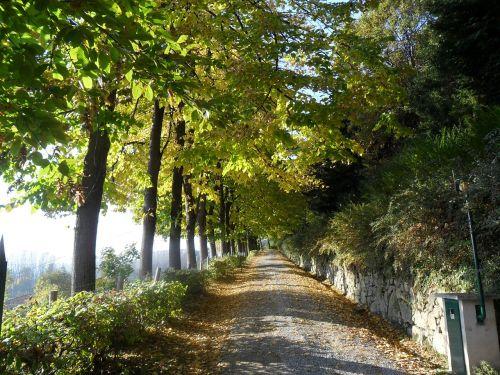 Kelias,  Pakilimas,  Medžiai,  Viale