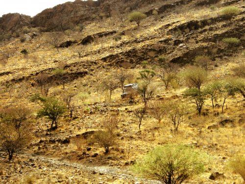 kelias, plikas, erškėčiai & nbsp, medžiai, kietas, transporto priemonė, kalnas, kalvotas, kalvos, sausas, nevaisinga, kietas, akmeninis, uolingas, Hillside, Namibija, dykuma, akmenuotas kelias