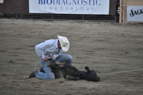 rodeo,ranča,kaubojus