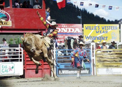 rodeo,berniukas,kaubojus,bulius,Williams ežeras,Britų Kolumbija,Kanada,įvykis lauke,veikla,klounas
