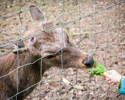 stiragai,maitinti,valgyti,laukiniai,zoologijos sodas,laukinio gyvenimo parkas,elnių parkas,galva