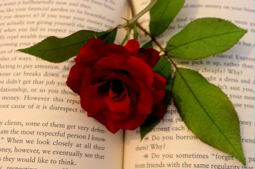 Romantika,  Romanas,  Rožė,  Meilė,  Fonas,  Valentines,  Raudona,  Romantiškas,  Herojus,  Romantika Romanas Su Roze