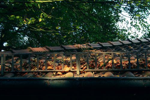 stogas,medis,saulė,saulės šviesa,šviesa,šviesos paplitimas,gable,stogas,namo stogas,plytelių stogas,plyta,samanos,pastatas,gamta,lapai,ruduo
