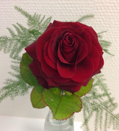 Ros, Raudona, Gėlės, Raudona Gėlė, Raudona Roze