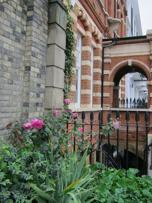 rožė,rožinis,plyta,eilinis namas,sodas,pastatas,raudona plyta,geležis