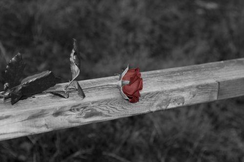 rožė,juoda ir balta,turėklai,paminklas,rožės turėklai