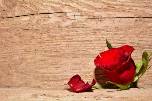 rožė,raudona,gėlė,žiedas,žydėti,fonas,mediena