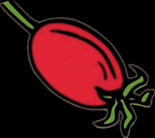 rožinė hip hip,raudona,vaisiai,žolė,žolelių,augalas,rosa,augmenija,vitaminas,vitaminai,nemokama vektorinė grafika