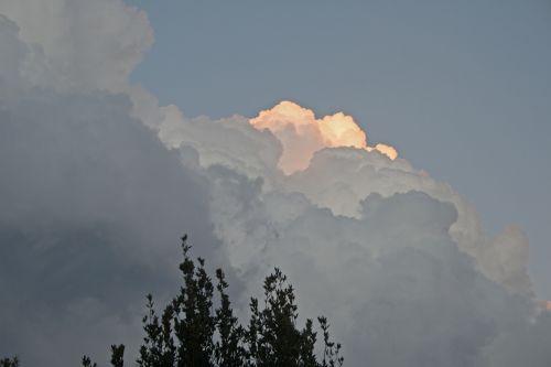 debesis, cumulus, apvadu, rožė, gilt, atspalvis, šviesus, dangus, gamta, rožių tonuotas debesys su medžio viršuje