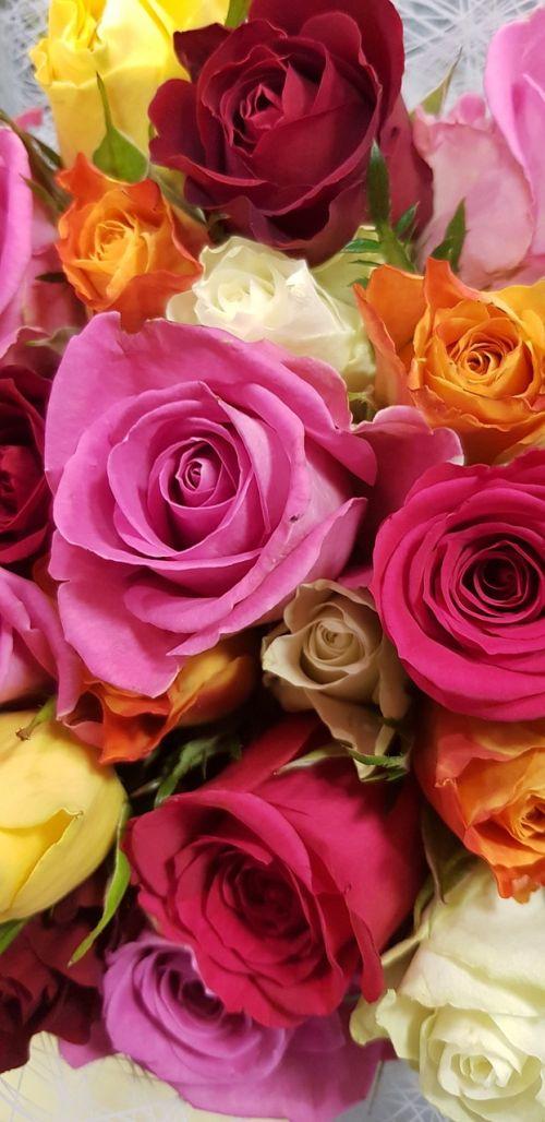rožės,geltona,raudona,gėlė,rožių žydėjimas,žiedas,žydėti,floribunda,Uždaryti,žiedlapiai,atidaryta roze,žydėti,puokštės,gėlės,žydėti rožės,puokštė,gėlių sveikinimas