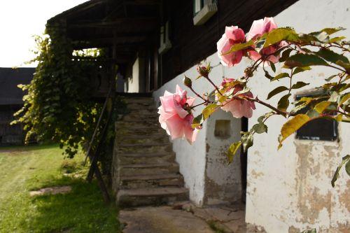 rožės,ūkis,laiptinė,pieva,daugiau,idiliškas,kultūros kraštovaizdis,ekskursijos diena