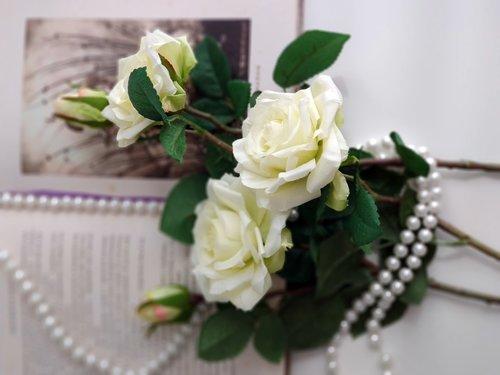 rožės, taškeliai, perlai, knyga