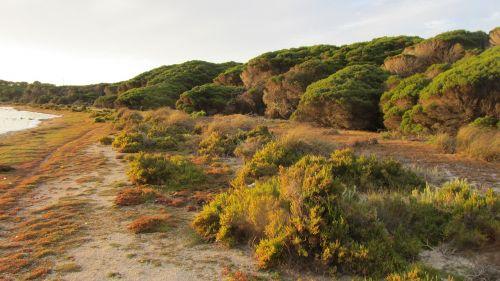 rottnest sala,sala,australia,rottnest,ištemptas,įėjimas,Vakarų Australija,perth,šveitimas,šepetys,windswept,gamta,lauke,augalai,krūmai,užsitęsę medžiai,žolė,saulėlydis,panorama