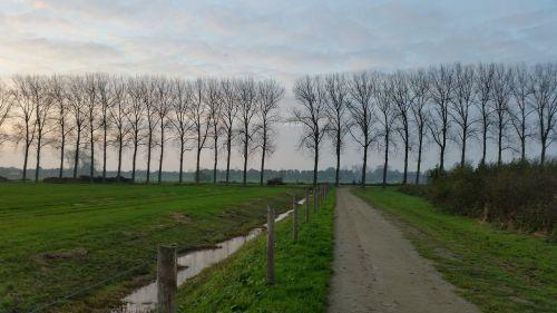 medžių ruožas,kelias,gamta