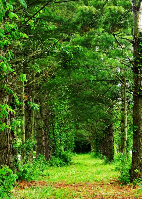 medžiai, tress, medžių ruožas