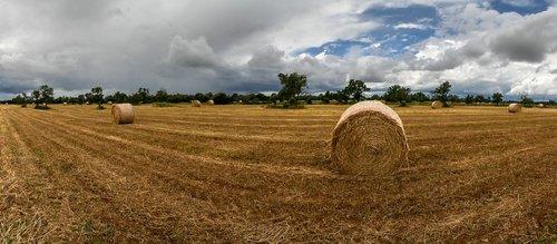 kaimo vietovė, laukas, pobūdį, kraštovaizdis, Ispanija, auginimas, karvės, maisto, šiaudų, pragyvenimo, laukinių srityje, dangus, Žemdirbystė, Grožio, ūkis, kaimo kelių, debesys, aguonos, laukinių, laukinių gėlių