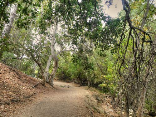 kelias, purvo & nbsp, takas, takai, miškas, Šalis, kaimas, medžiai, vaikščioti, vaikščioti, lauke, gamta, kaimo purvo kelias