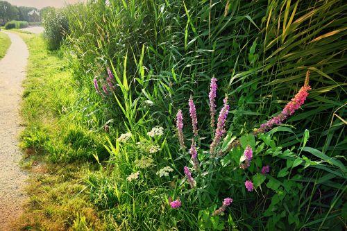 skrenda,upės krantas,gėlės,Krantas,lapija,vandens augalai