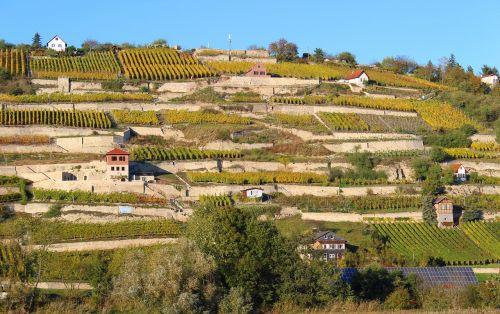 Saale unstrut,vynuogynai,vynas,kraštovaizdis,terasos vynuogynas,vynuogynai,išstumti,Saksonija-Anhaltas,Vokietija,vyno regionas,vyno gamintojas,namai
