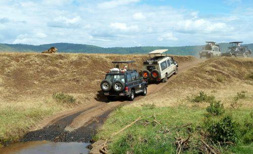 safari,laukinės gamtos stebėjimas,Jeep,liūtas,off road,neapsaugotas,Tanzanija,ngorongoro krateris,Nacionalinis parkas,turizmas,transportas