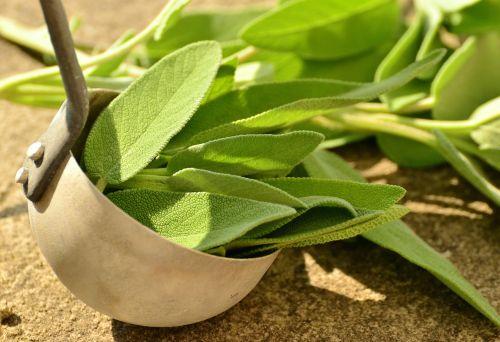 šalavijas,žolelės,kulinarijos žolės,sveikas,arbatos žolelės,į sveikatą,vaistažolių augalas,sodo augalas,gijimas,vaistiniai augalai,virtuvės prieskoniai,aromatas,virtuvė šalavijas,sodo prieskonių augalas,tikrasis šalavijas,žalias,žolė,lapai
