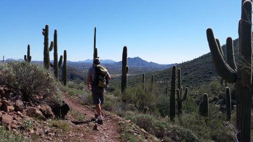 saguaro kaktusas,kaktusai,žygiai,Arizona,dykuma,usa,augmenija,dykuma,lauke,takas,urvo upės,az