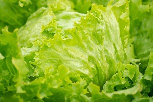 salotos, Iceberg salotos, žalias, salotų lapai, Sodas, daržovių sodas, sveiki, žalias, veganas, Vegetarų, žalias maistas, natūralus produktas