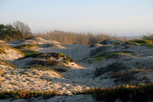 vandenynas, jūra, papludimys, smėlis, San & nbsp, kopos, Ventura, Kalifornija, smėlis & nbsp, kopos, kopos, ledas & nbsp, augalas, sultingas, smėlio kopos ir sukulentai