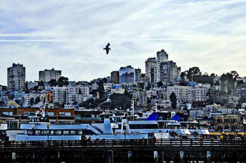 miestas, San & nbsp, francisco, panorama, uostas, dažytos, tapybos, meno, miesto, gyvenimo būdas, San Franciskas