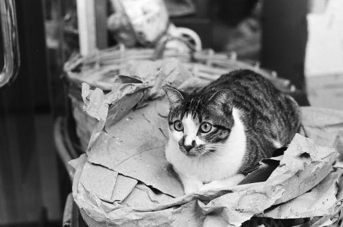 sat, gatvė, kompaktiška, katė, juoda ir balta, gyvūnas, augintiniai, plėšrūnas, juoda ir balta nuotrauka, vizualinis, mielas, fotografija, juoda ir balta katė, atsipalaiduoti, pavargęs, be honoraro mokesčio