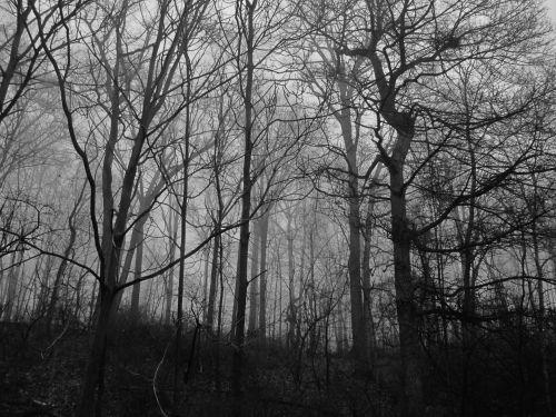 miškai, medžiai, rūkas, žiema, baugus, miškas, baisi miškai