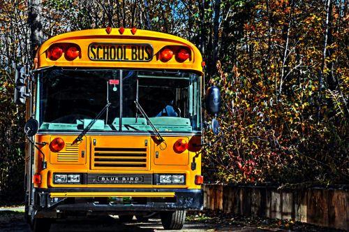 autobusas, mokyklos & nbsp, autobusas, mokykla, kritimas, ruduo, lapija, mokyklinis autobusas rudenį