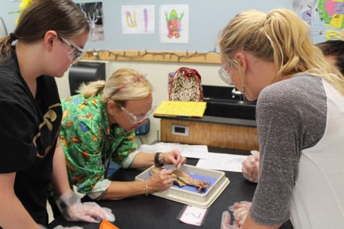 mokslas,klasė,ištirpinti,laboratorija,laboratorija,klasė,studentas,mokykla,švietimas,mokslinė laboratorija,mokymasis,mokslinis,tyrimai,mokytis,eksperimentas,mokinys,mokytojas