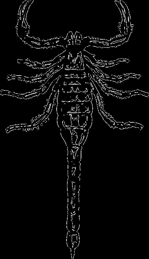 skorpionas,nuodingas,pavojingas,baimė,stinger,žiupsnelis,nuodai,laukinė gamta,creepy,agresija,šurmuliuojantis skorpionas,mirtini,spalva,egzotiškas,erekcijos,nemokama vektorinė grafika
