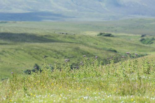 Škotija,pieva,kraštovaizdis,gamta,Anglija,gamtos parkas,laukinio gyvenimo parkas,kalnas,parkas,senas,mistinis,aukštumų ir salų,Nacionalinis parkas,atmosfera,škotų,žalias,ganykla,žolė,idiliškas,nemokamai