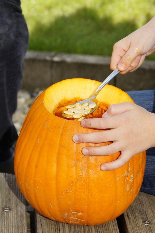 išvalyti,išsemti,moliūgas,Halloween,ruduo,oranžinė,daržovės,išskaptuoti,Spalio 31 d .,dangtelis,drožyba moliūgų,iškirpti moliūgo vaiduoklis,Halloweenkuerbis,moliūgų vaiduoklis,rudens apdaila,Diy moliūgų vaiduoklis,iškirpti,Spalio mėn,Moliūgas žibintas,tuščia,vidinis,vaikas,pokštas arba saldainis