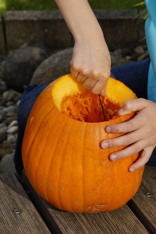 išvalyti,išsemti,moliūgas,Halloween,ruduo,oranžinė,daržovės,išskaptuoti,Spalio 31 d .,dangtelis,drožyba moliūgų,iškirpti moliūgo vaiduoklis,Halloweenkuerbis,moliūgų vaiduoklis,rudens apdaila,Diy moliūgų vaiduoklis,iškirpti,Spalio mėn,Moliūgas žibintas,tuščia,interjeras,vidinis,vaikas,pokštas arba saldainis
